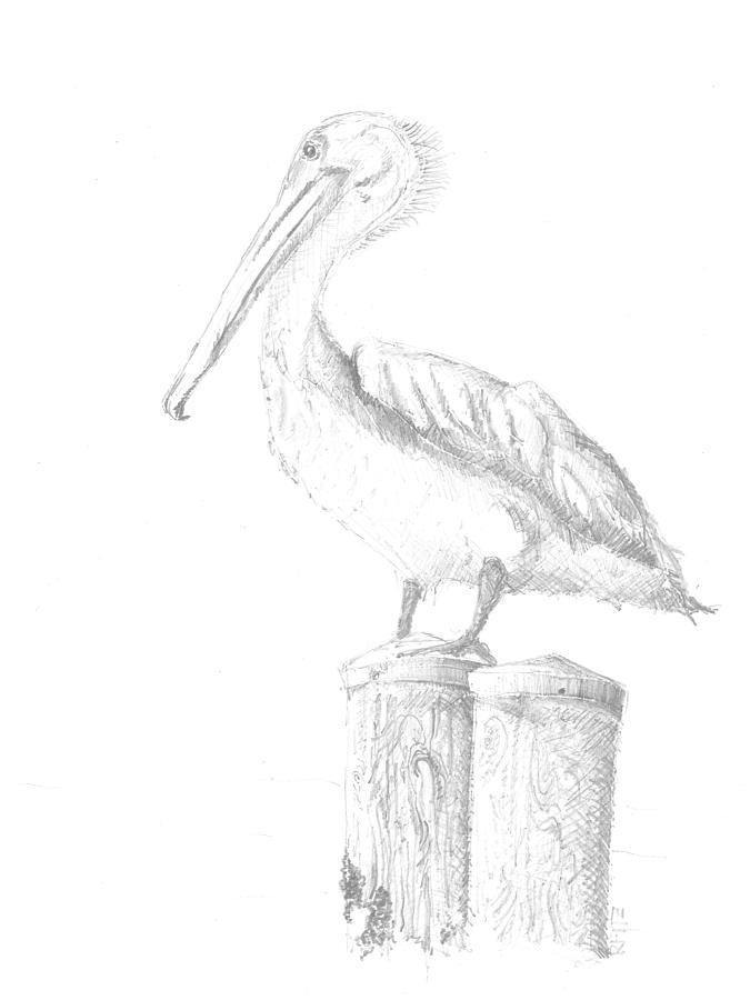 Gulf Shore Pelican Drawing by Ricky Fitzpatrick