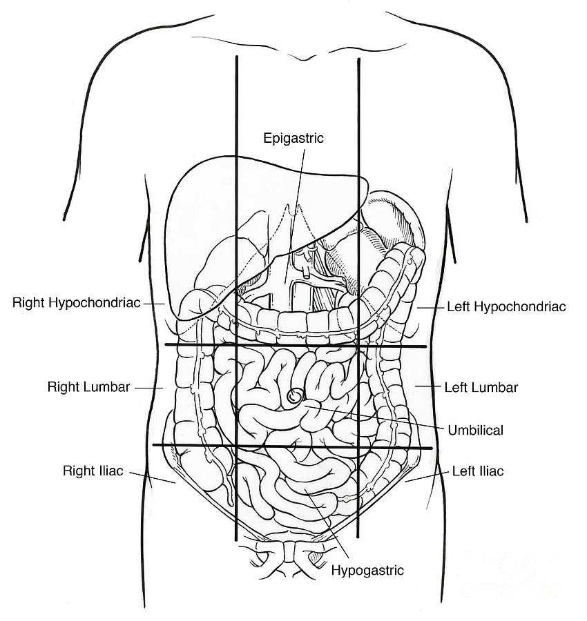 Illustration Of Nine Abdominal Regions Photograph by