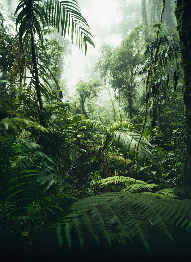 Jungle In Monteverde Cloud Forest Photograph by Axiom