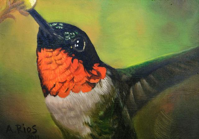 Lil Birdy Alex Rios
