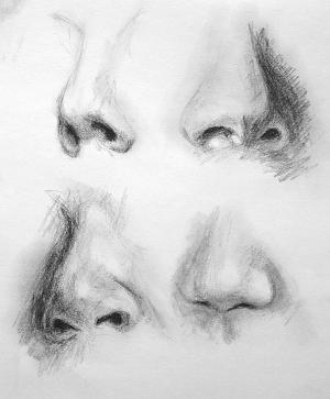 noses drawing dinwiddie paul charcoal drawings 4th uploaded march which