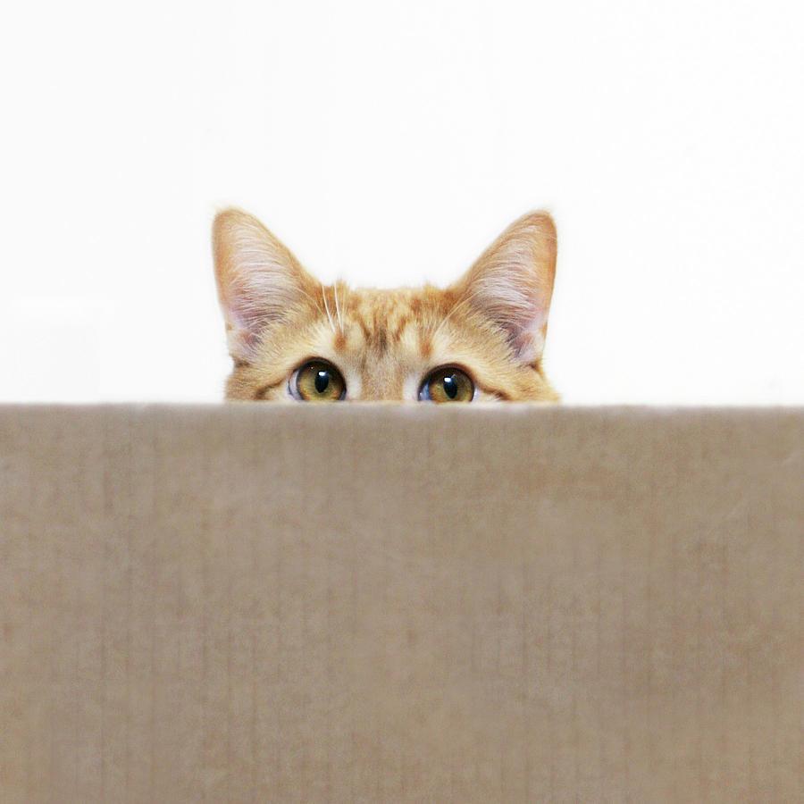 Curious cat looking from behind a box. Peeking cat