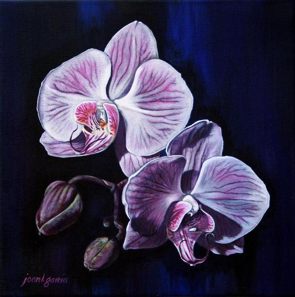 Orchids Ii Joan Garcia