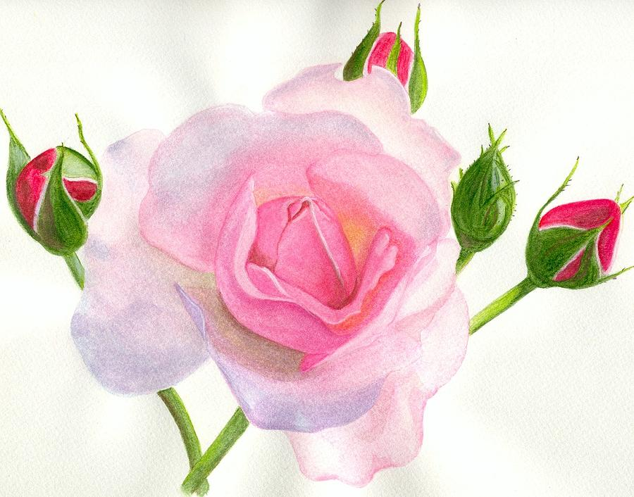 pink rose by becky