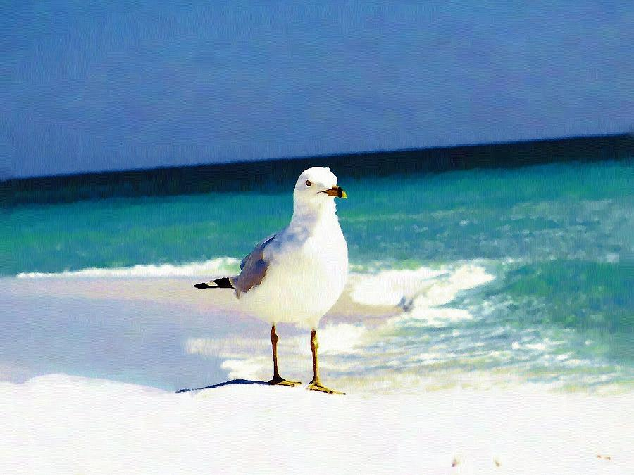 Seagull At Beach Painting By Mander Jack