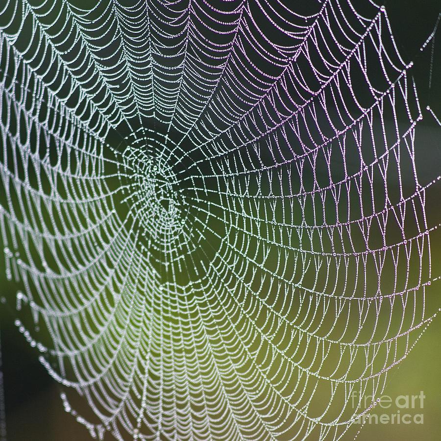 Pajęcza sieć. Fotografia autorstwa Heiko Koehrer Wagner.