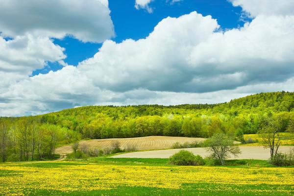 spring farm landscape and blue