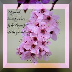 Inspirational flower quotes and poems gardening flower and vegetables spring flowering tree inspirational rumi floral photograph by p s mightylinksfo