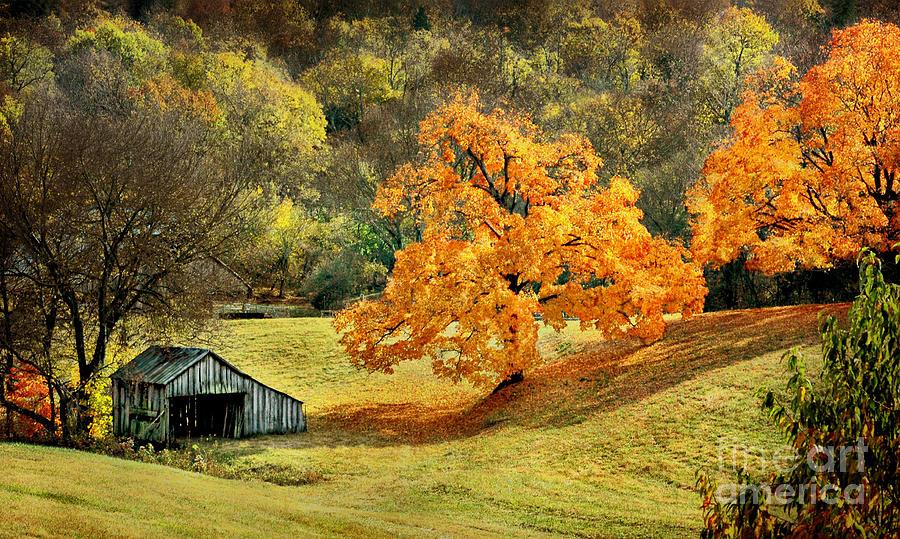 Fall Birch Tree Wallpaper Tennessee Autumn Farmland Photograph By Cheryl Davis