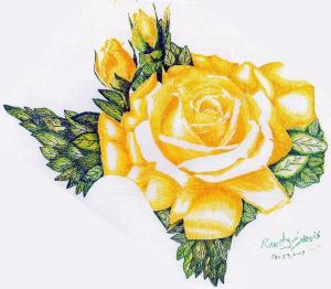 yellow rose texas drawing randy sirois drawings 28th november which uploaded