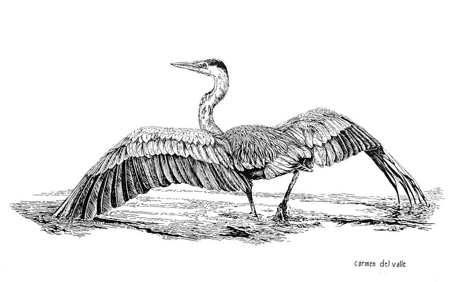 The Great Blue Heron Drawing by Carmen Del Valle