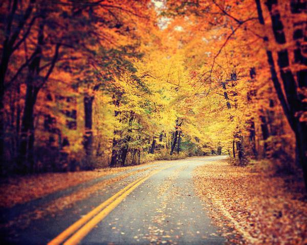 road traveled lisa