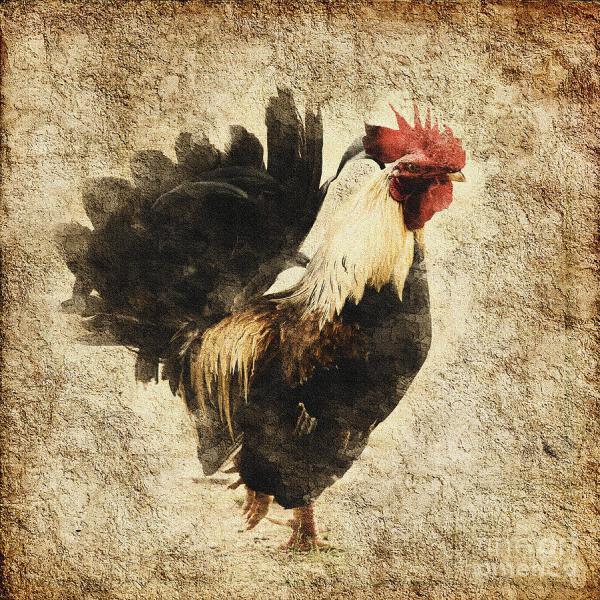 Vintage Rooster Art Prints