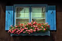 Window Flower Box by Joanne Coyle