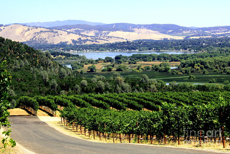 Wine Country California Photograph By Gail Salituri