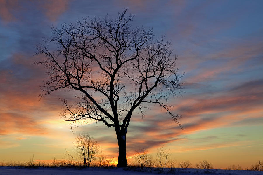 Winter Sunset Tree Photograph by John Stephens
