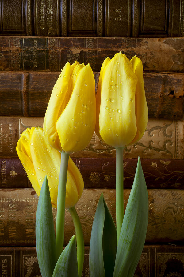 Yellow Tulips And Old Books Photograph by Garry Gay