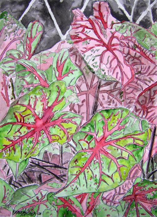 caladiums tropical plant art