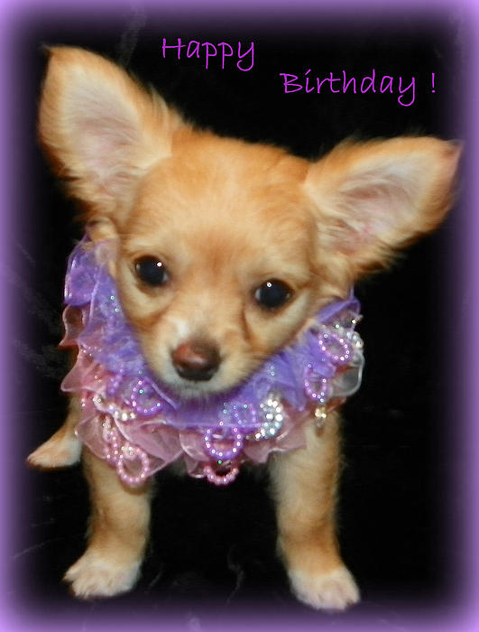 Happy Birthday Chihuahua Greeting Card For Sale By Sheri