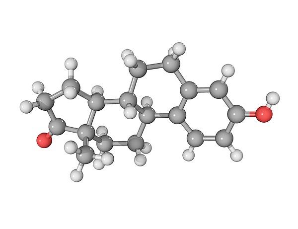 Oestrone Hormone Molecule by Laguna Design