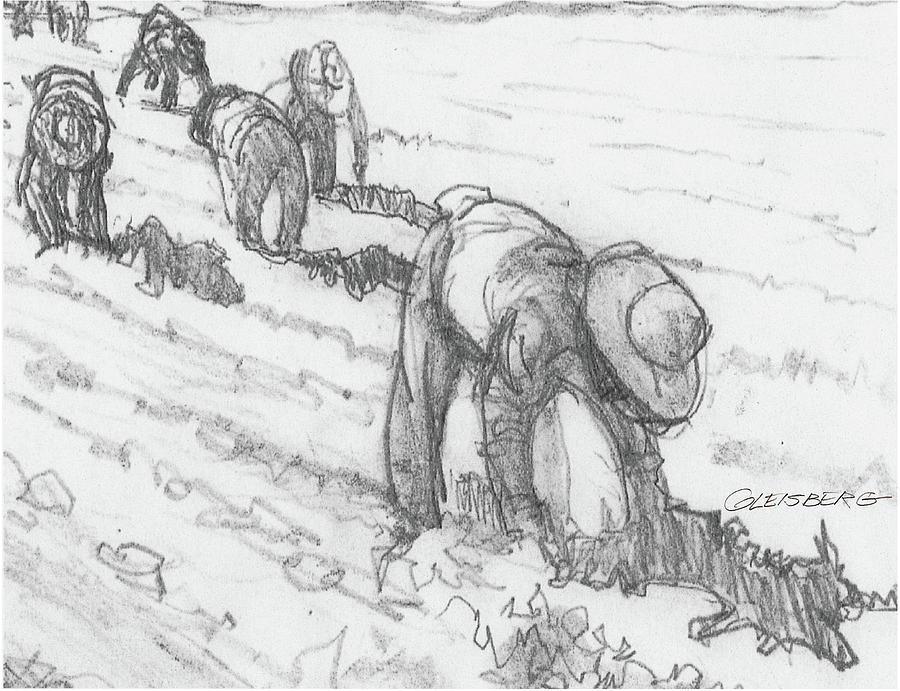 Bracero Stoop Labor Drawing by Craig A Christiansen