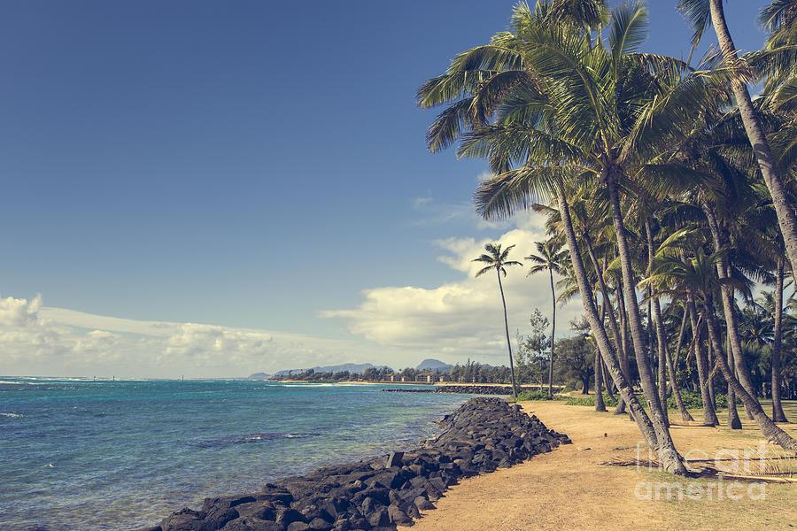 Coconut Palm Tree On The Sandy Beach In Kapaa Hawaii