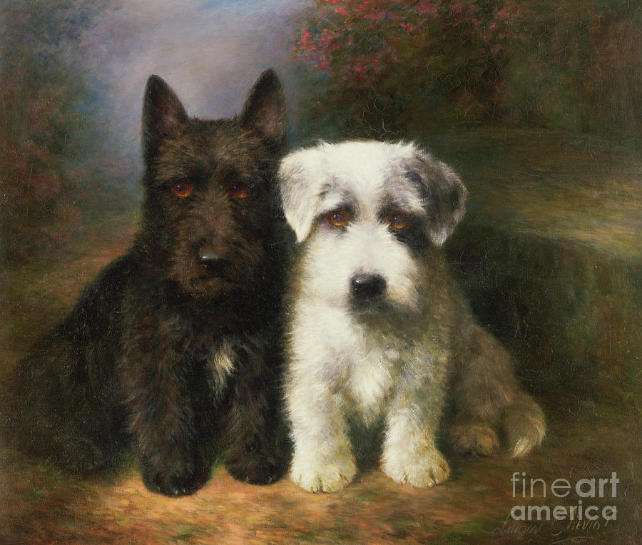A Scottish And A Sealyham Terrier Painting By Lilian Cheviot