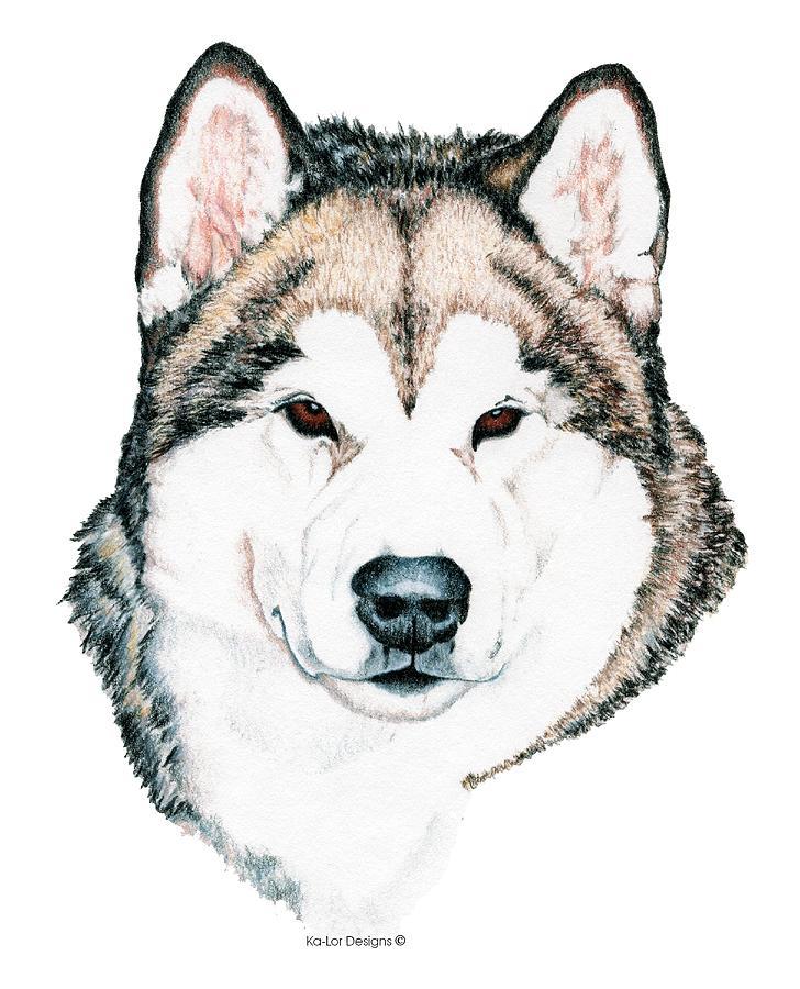 Alaskan Malamute Drawing By Kathleen Sepulveda