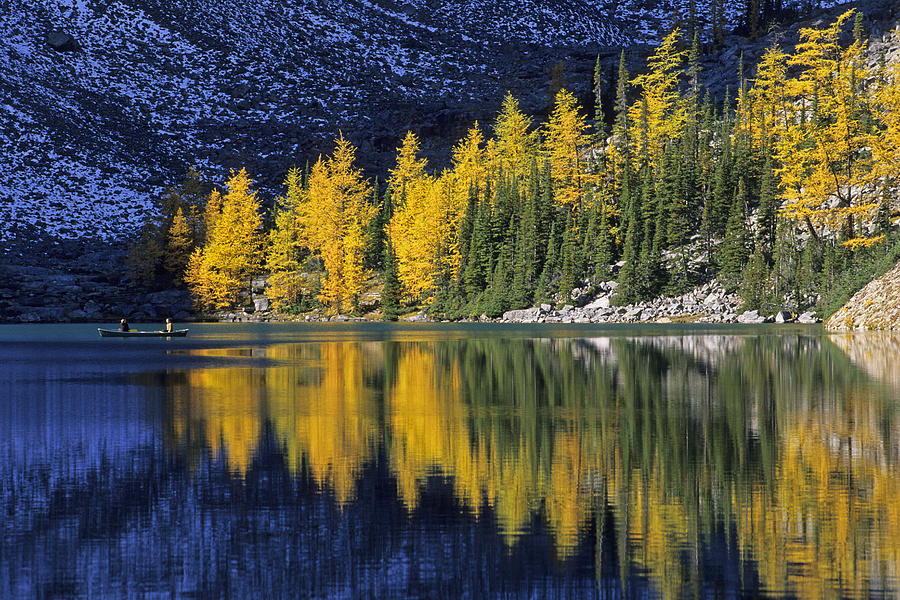 Fall Trees Iphone Wallpaper Autumn Alpine Larch Trees Lake Agnes Photograph By John