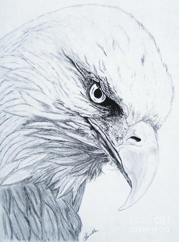 Bald Eagle Drawing by Nancy Rucker