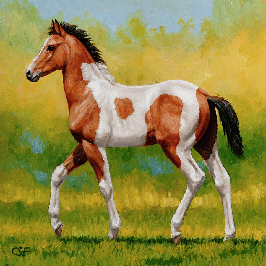 Bay Pinto Foal Painting by Crista Forest