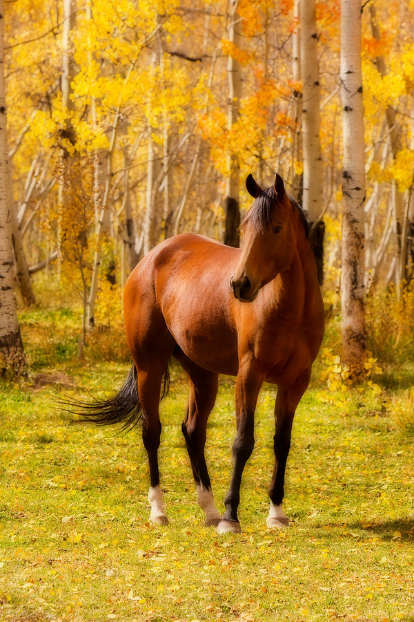 Fall Foliage Iphone Wallpaper Beautiful Autumn Horse Photograph By James Bo Insogna