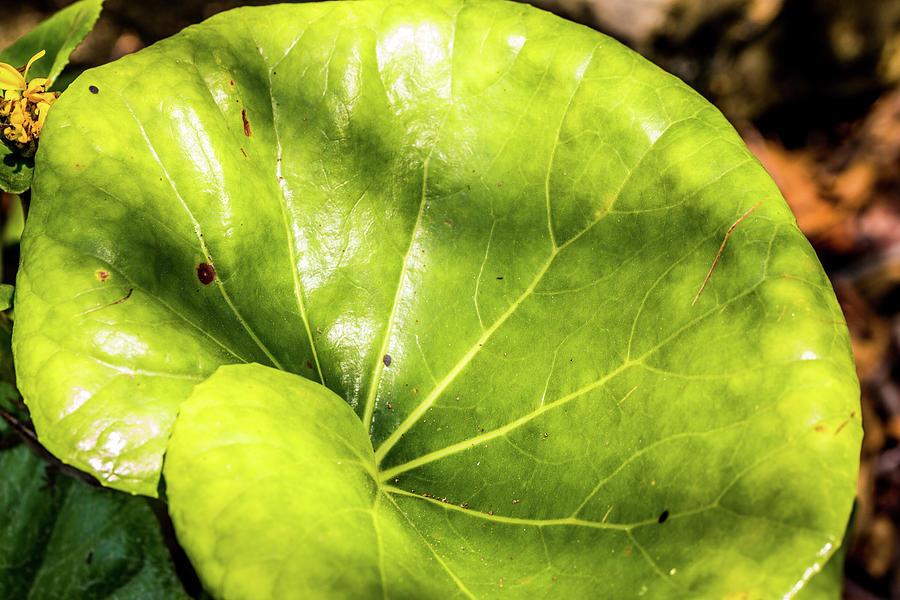 big green leaf by