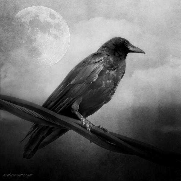 Black And White Gothic Crow Raven Art