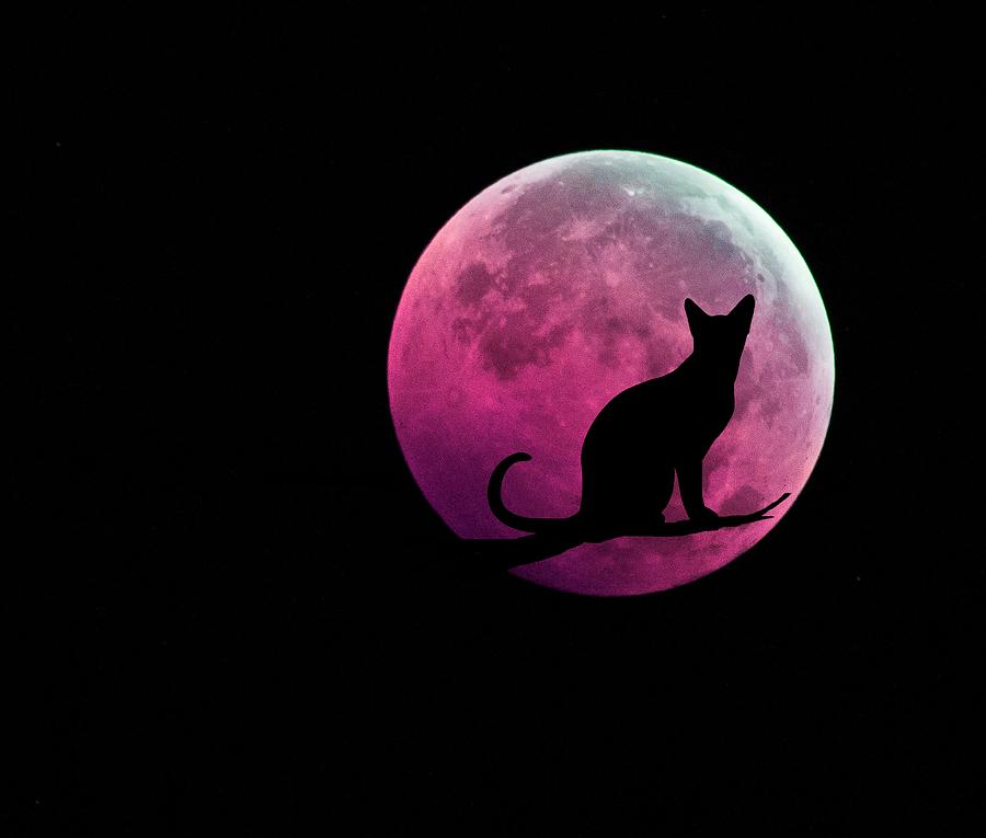 Breast Cancer Awareness Wallpaper Iphone Black Cat And Pink Full Moon Digital Art By Marianna Mills