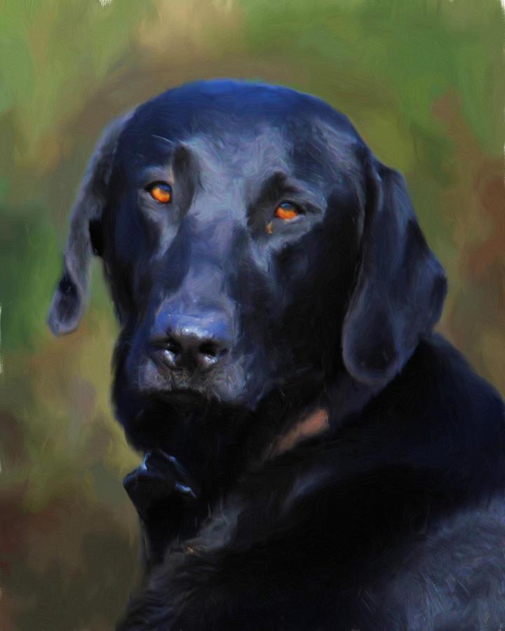 Black Lab Portrait Painting By Jai Johnson
