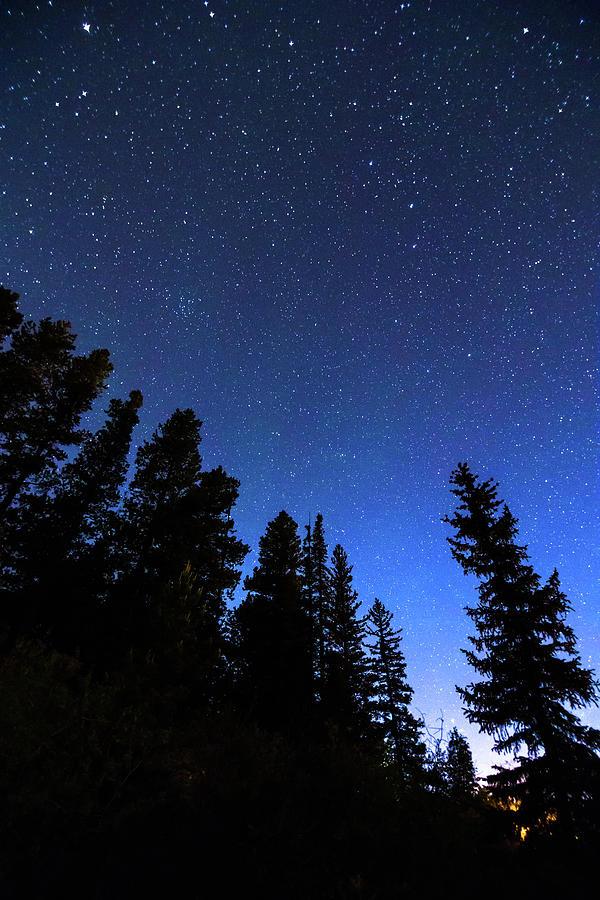 blue night forest portrait