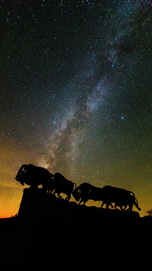 Caprock Canyon Bison Stars Photograph by Stephen Stookey
