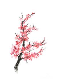 Cherry Blossom Branch Watercolor Poster Painting by Joanna ...