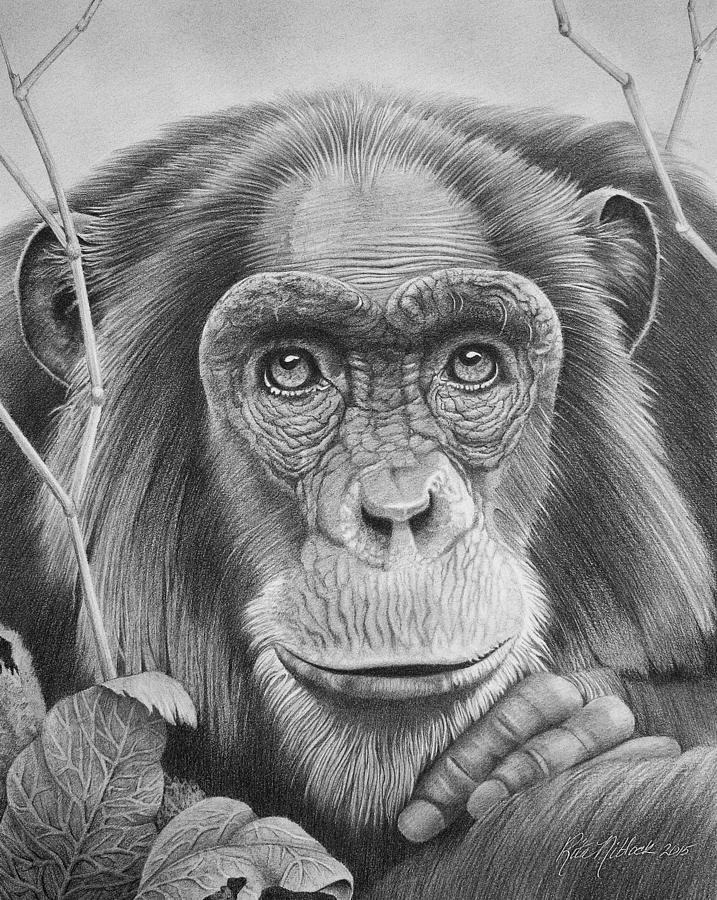chimpanzee by rita niblock