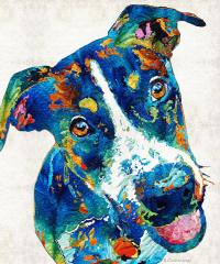 Colorful Dog Art - Happy Go Lucky - By Sharon Cummings ...