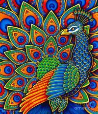 Colorful Paisley Peacock Drawing by Rebecca Wang