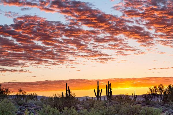 Colorful Sonoran Desert Sunrise Photograph by James BO Insogna