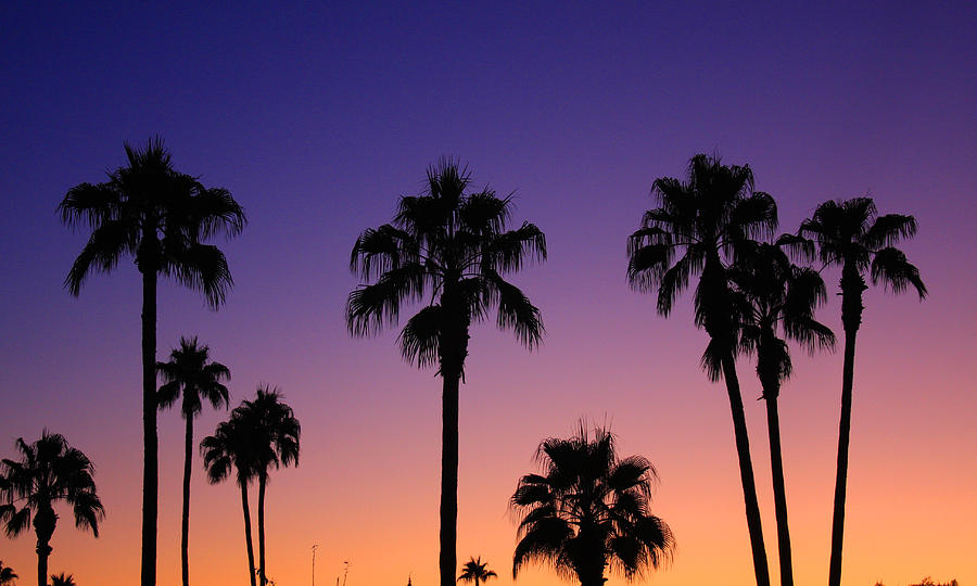 Colorful Tropical Palm Tree Sunset Photograph By James BO