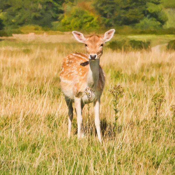 Cute Deer Painting