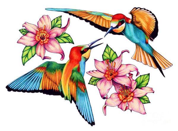 dancing hummingbirds drawing