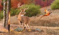 Deer Artwork - His Name Is Prince Painting by Dale Kunkel ...
