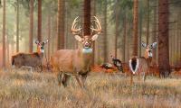 Whitetail Deer Art by Dale Kunkel - Official Site