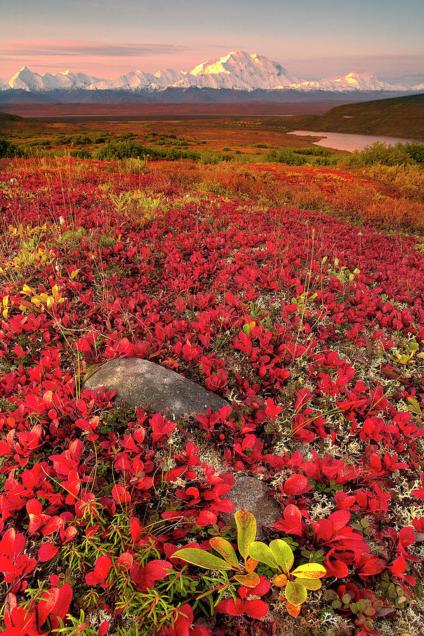Maine Fall Foliage Wallpaper Denali National Park Fall Colors Photograph By Kevin Mcneal
