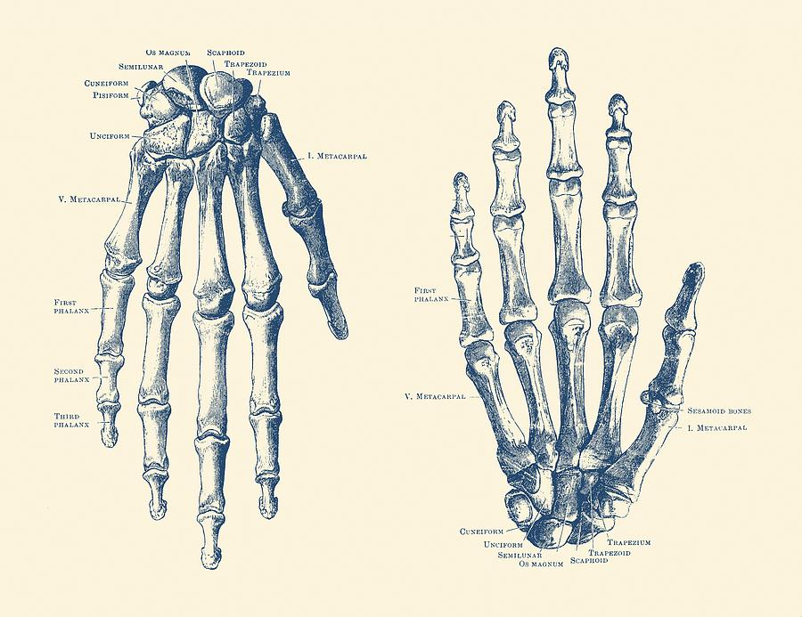 vintage diagram 2010 dodge journey wiring double hand skeletal anatomy print drawing by